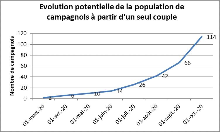 Graph evolution campagnols