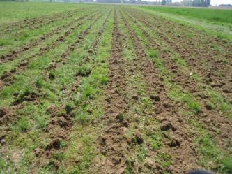 Strip-till dans une prairie 1passage à gauche/ 2 passages à droite